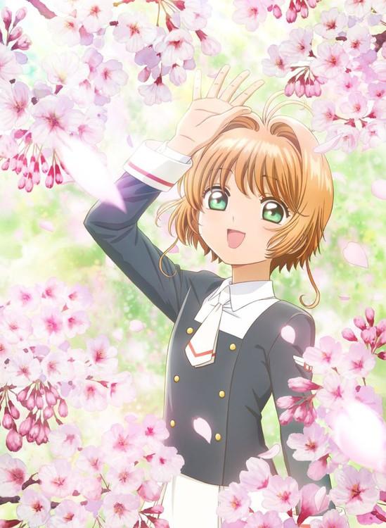 Sakura_ccs